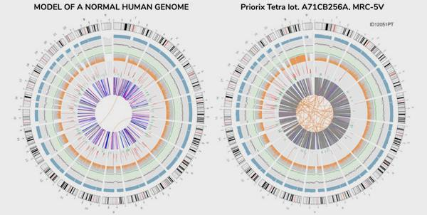 """Komórki rakowe w szczepionkach z komórek poronnych - wyniki włoskiego laboratorium. Czy chodzi o """"rakowy model biznesowy""""? szczepionki rak 2"""